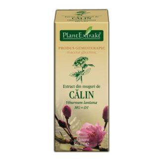 Extract din muguri de CĂLIN, 50 ml, Plant Extrakt