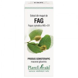 Extract din muguri de FAG, 50 ml, Plant Extrakt